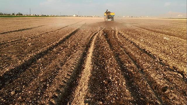 کود دهی زمین برای تولید زعفران با کیفیت   شرکت صدف پک