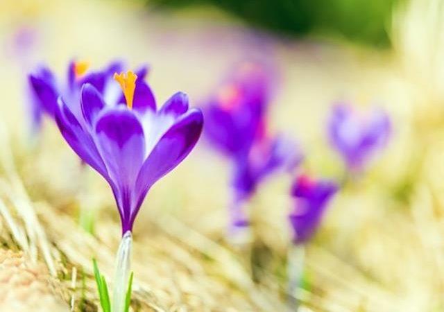 بررسی کیفیت زعفران | شرکت صدف پک