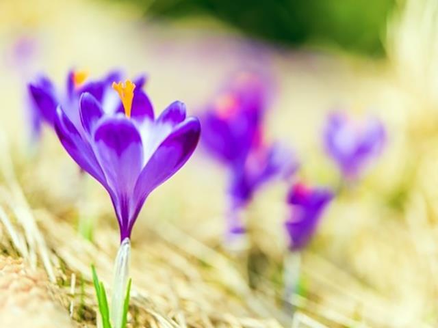 بررسی کیفیت زعفران   شرکت صدف پک