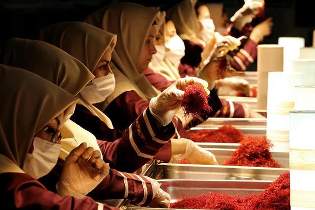 پاک سازی و آماده سازی زعفران برای صادرات | شرکت صدف پک
