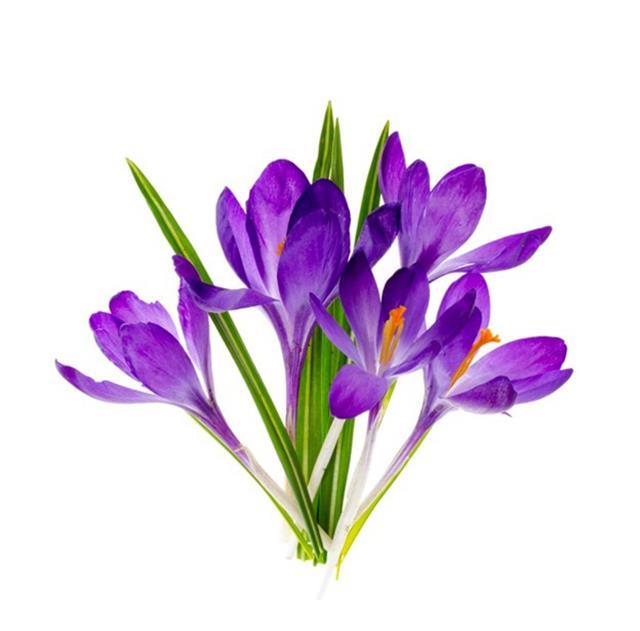 گل زعفران | شرکت صدف پک