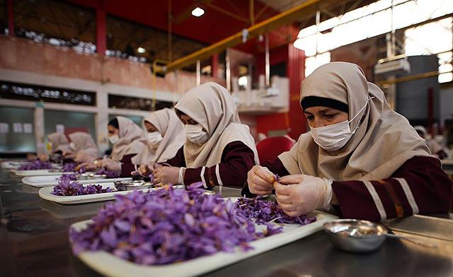 هزینه های منابع انسانی در شرکت بسته بندی زعفران | شرکت صدف پک