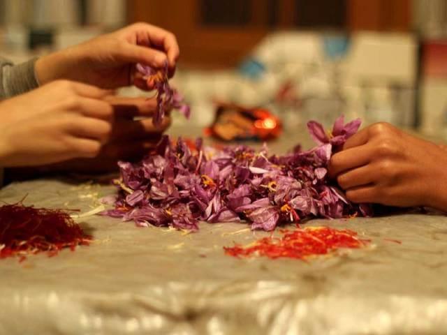 جدا کردن رشته های زعفران از گل در کشمیر | شرکت صدف پک