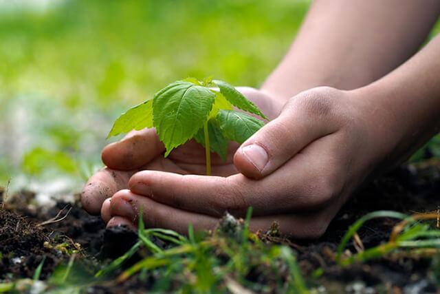 رعایت نکات زیست محیطی | شرکت صدف پک