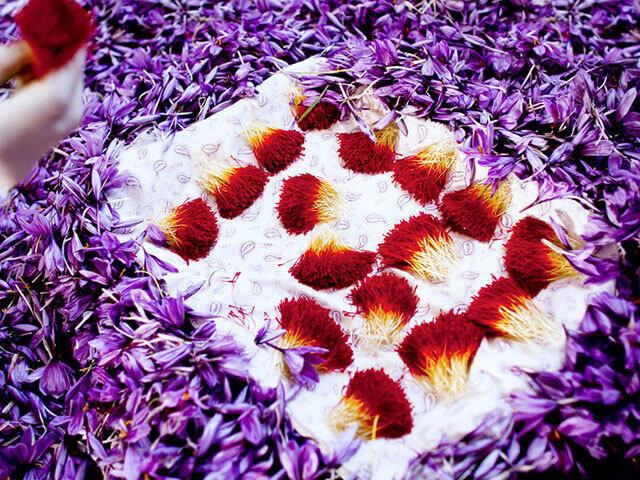 دسته های زعفران | شرکت صدف پک