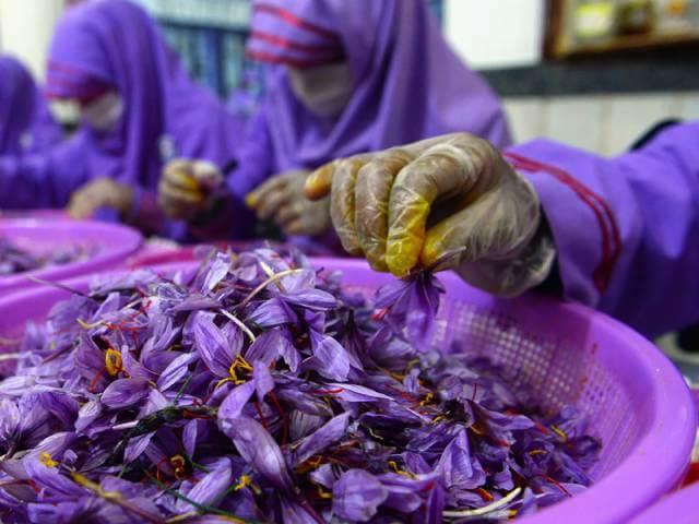 بسته بندی زعفران در منزل | شرکت صدف پک