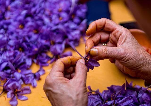 صفر تا صد راه اندازی بسته بندی زعفران در منزل   شرکت صدف پک
