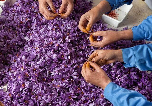 مجوز های بسته بندی زعفران در منزل | شرکت صدف پک