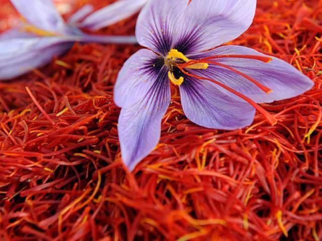 گل زعفران اصل از سه رشته درون گل تهیه می شود | شرکت صدف پک